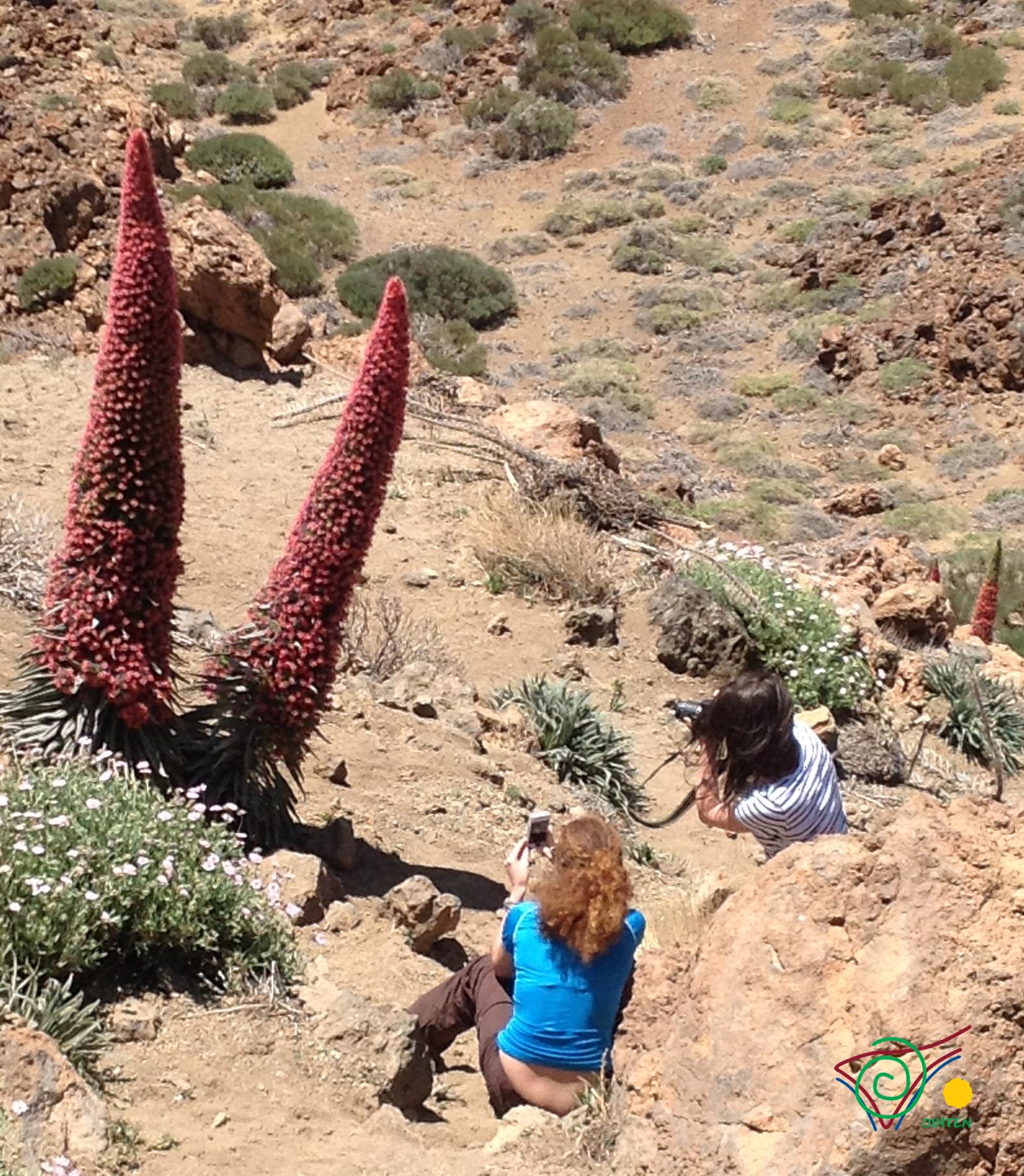 Mount-Teide-Flora