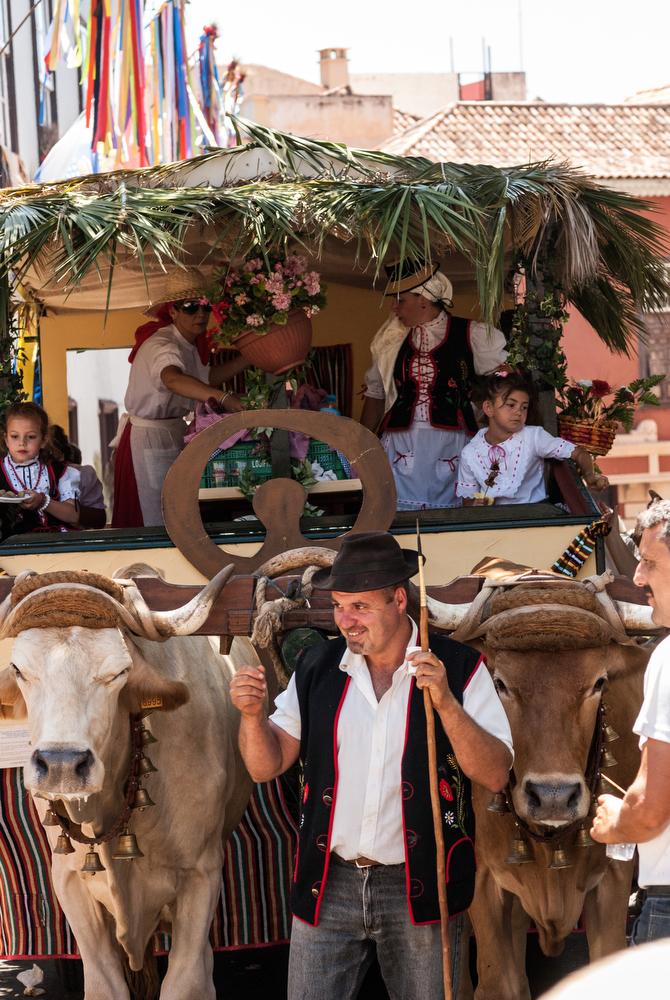 Romeria La Orotava, oxen pulling cart